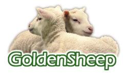 Goldensheep